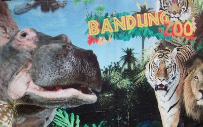 Asiansexdiary Bandung Zoo Visit  Siterip Video Asian XXX